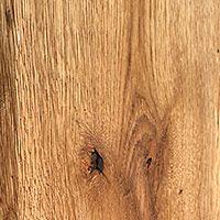 Gatunek drewwna - dąb szczotkowany